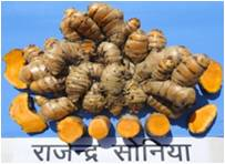 f8ed149820b Spices Seed Available - Dr. Rajendra Prasad Central Agricultural ...